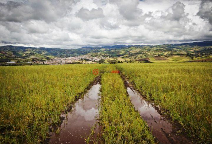 厄瓜多尔卡尔奇San Gabriel的房产,Rural,编号28140359