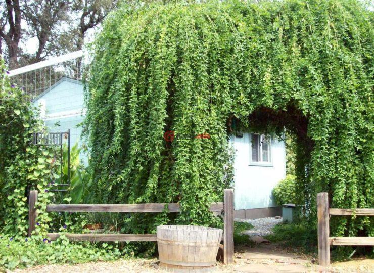 美国加州cottonwood的房产,19180 farquhar rd,编号34922206